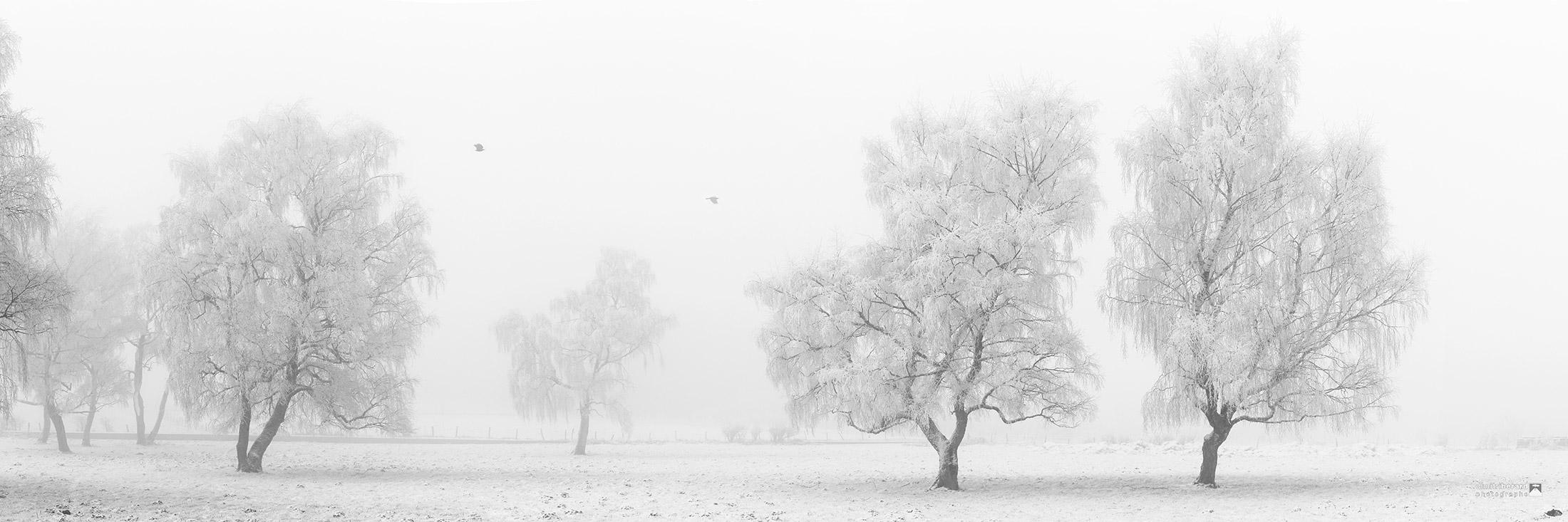 arbres-givrés-corbeaux