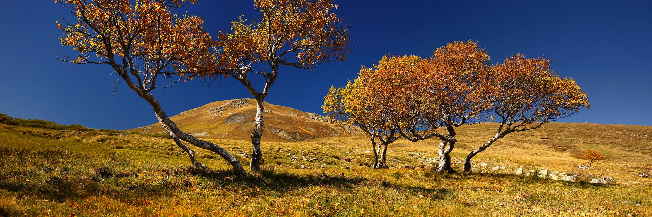 arbres-tors-au-paillaret
