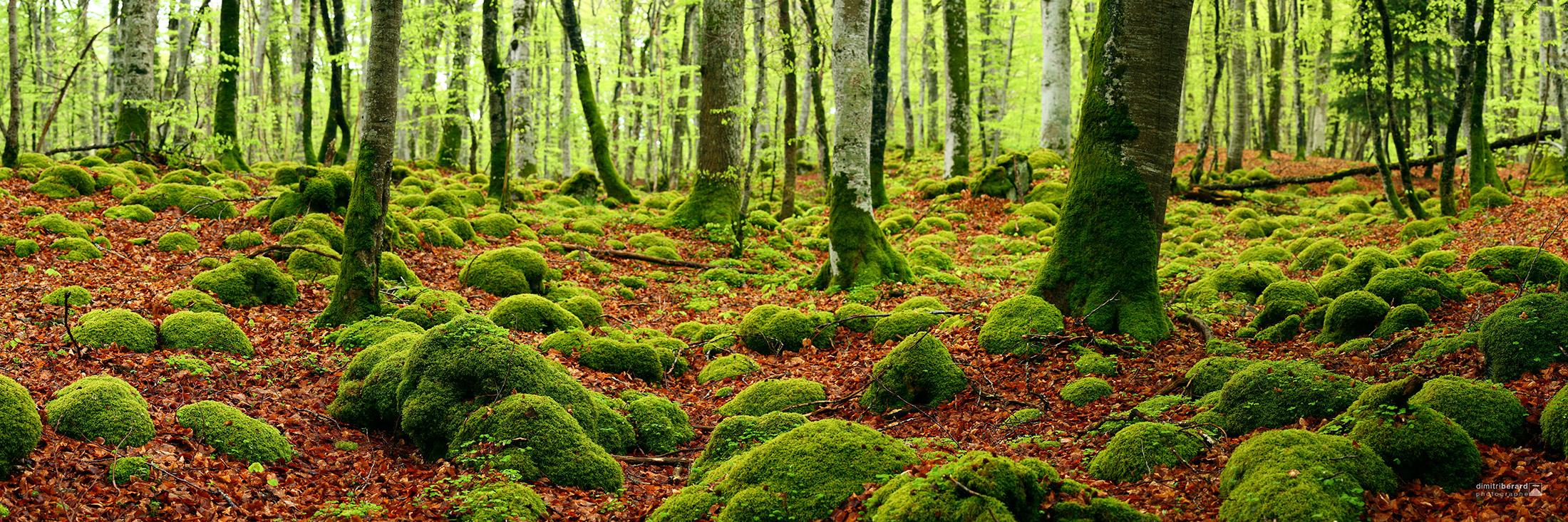 forêt-de-mazayes-I
