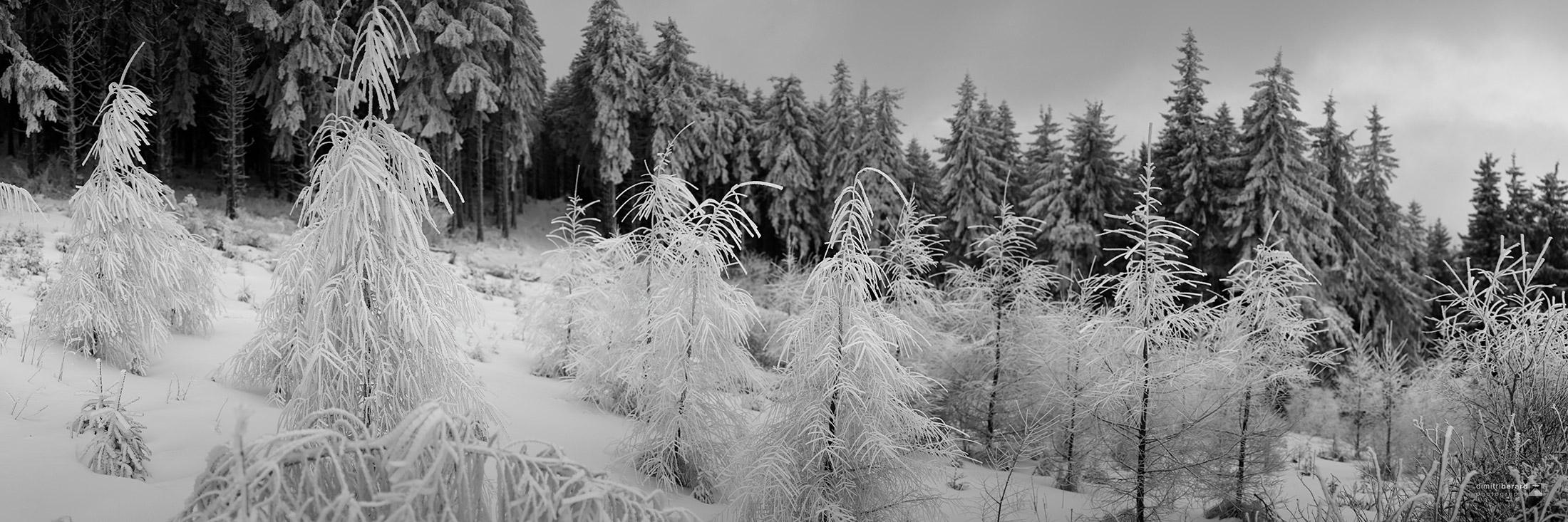 forêt-de-train-I