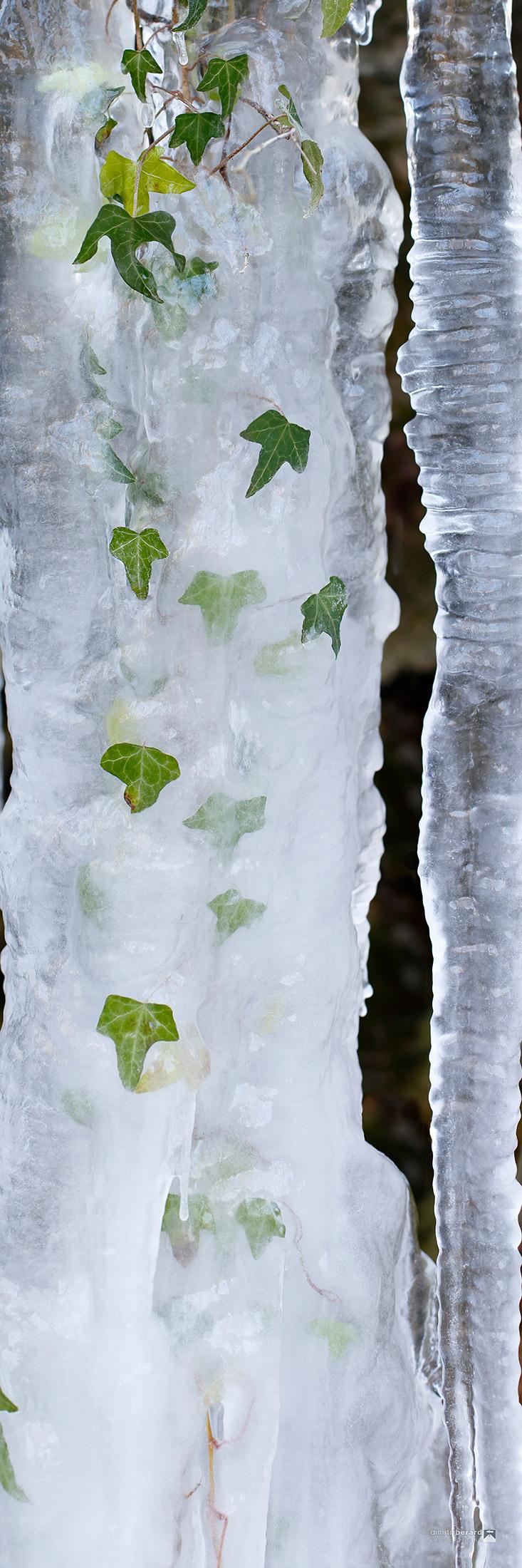 lierres-glacés