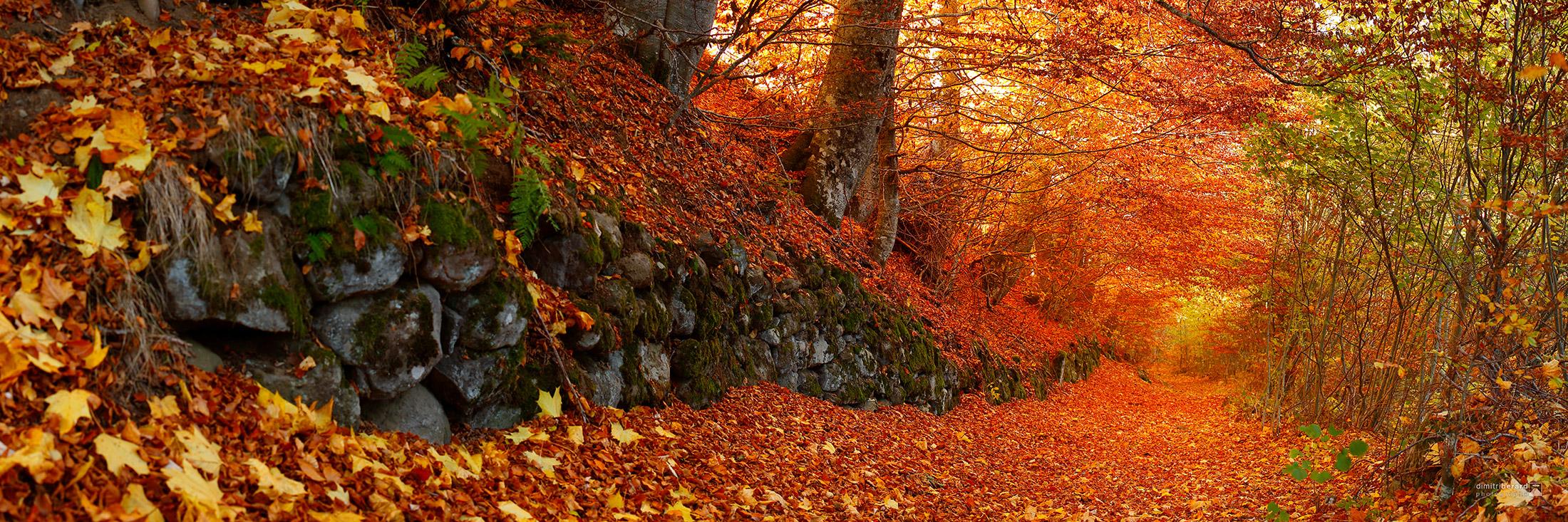 rivière-de-feuilles-I