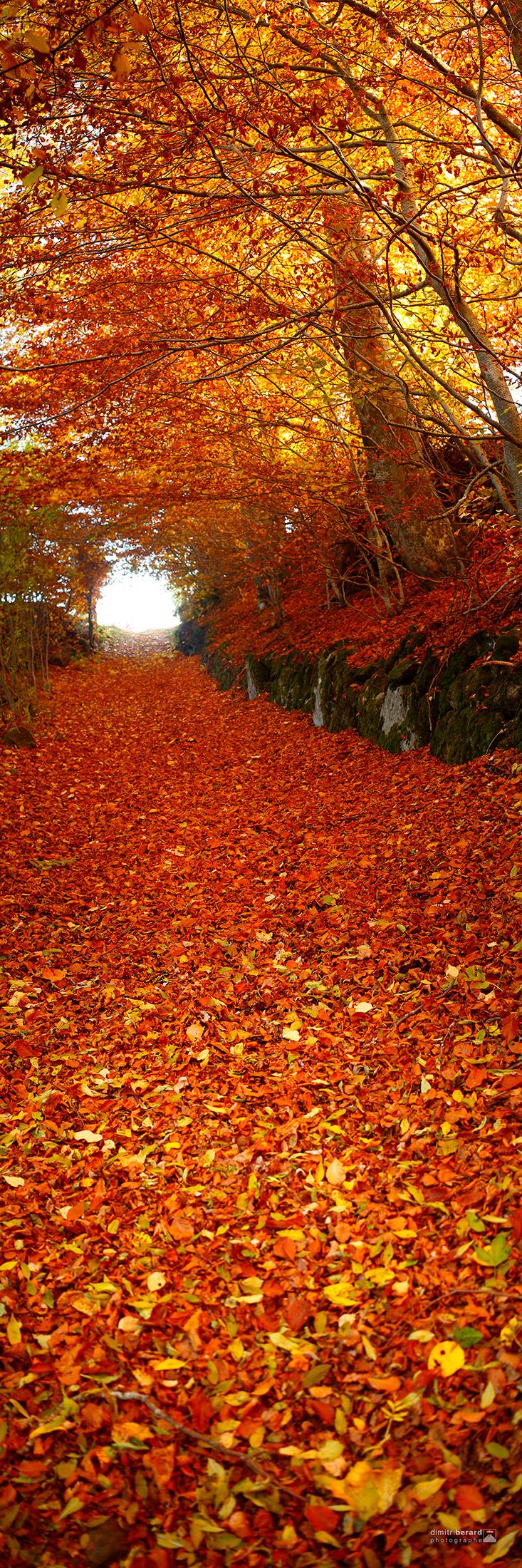 rivière-de-feuilles-II