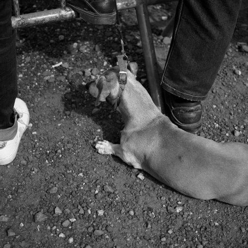 allanches-chien