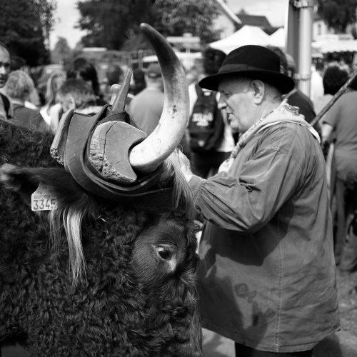 allanches-taureau