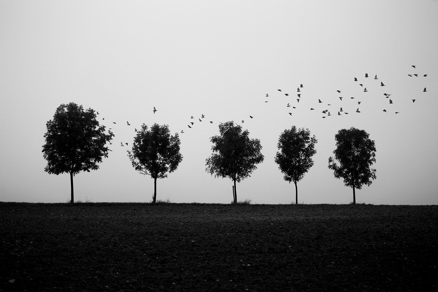 photographies noir et blanc wendering black and white photography arbre surrealism surrealiste chemin