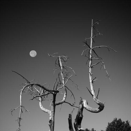 arbre-tor-truc-de-la-garde