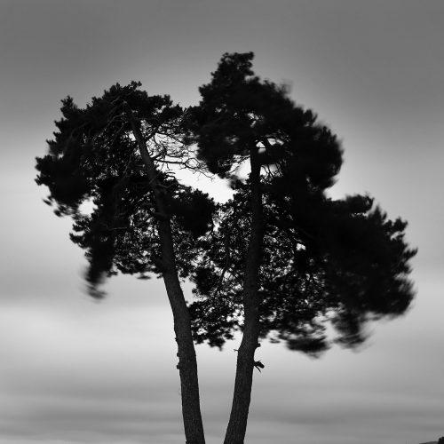 arbre-venteuges