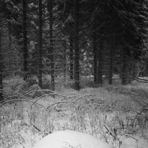 granite-forêt